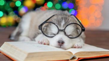Entrepreneur Michael Andrew Lauchlan Shares His Favorite (Famous) Poems About Pets